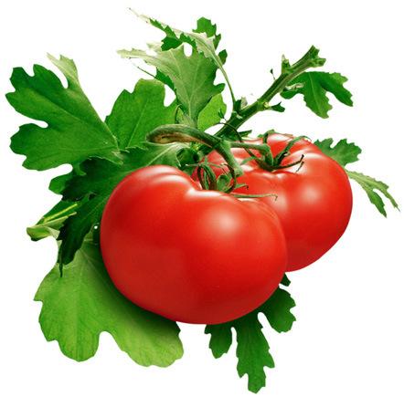 Berbagai Jenis Tomat dan Manfaatnya