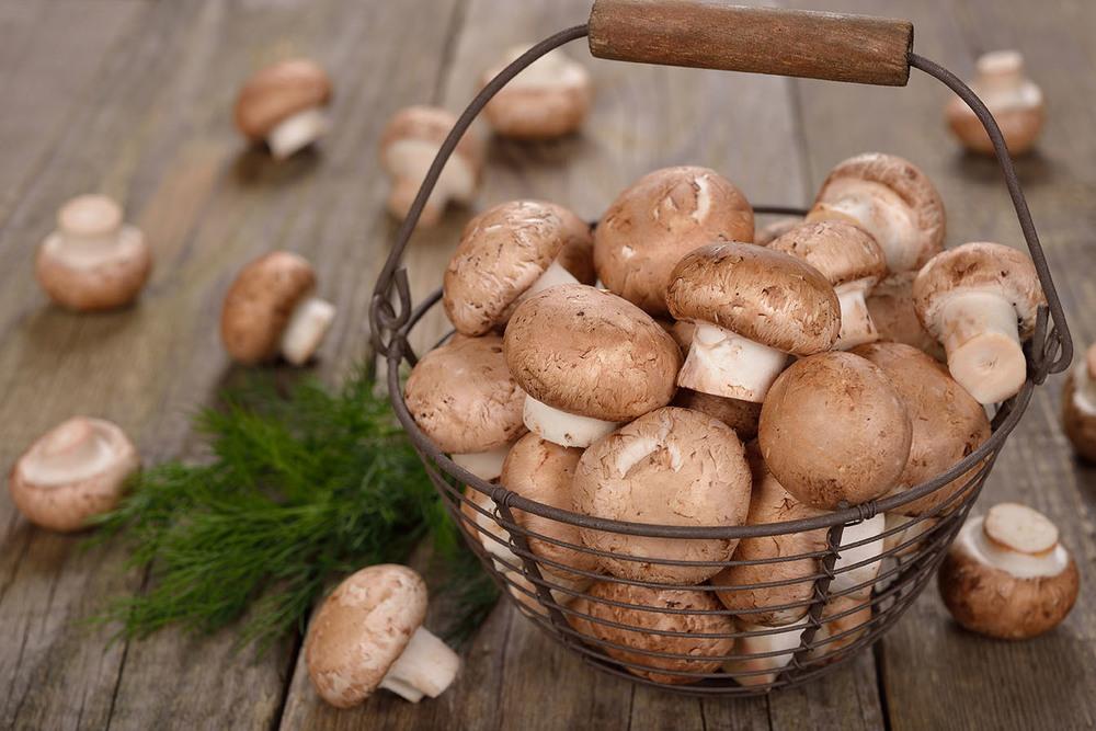 aneka jamur dalam masakan